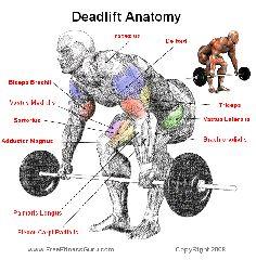 fitness inspiration exercise and motivation on pinterest : deadlift diagram - findchart.co