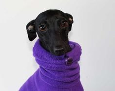 Purple Snood Jammies / Snowsuit for Italian Greyhounds / piccolo levriero italiano - other colours available