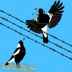 Fabric available on Spoonflower - Magpies: learn to fly  food call.  I used black pencil and black  white oil paint for the magpies, black stamped brushwork for the barbed wire no. 600,  pencil for the grass outlined with black, against a blue Australian sky; half-drop repeat. #magpies #magpie #Su_G su-g-designs