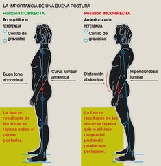 Importancia de abdominales. Posición erguida. Músculos Abdominales 2ef8e9cc3d49