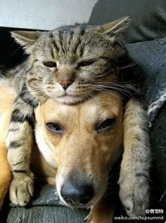 Cat: It's been a long, hard day, Dingo.  Dog: I know, Foxy, I can smell you.