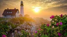 Картинки по запросу beautiful flowers with sunset