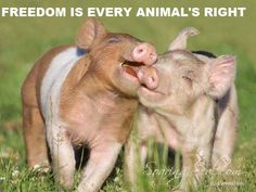 """""""Freedom is every animal's right."""" #vegan"""