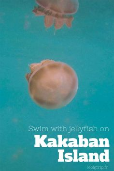 Swim with jellyfish