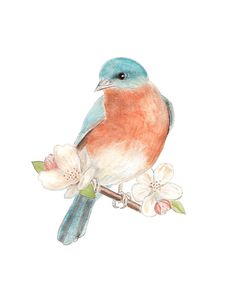 Bluebird with Apple Blossoms - Watercolor painting - Archival print - Bird art…