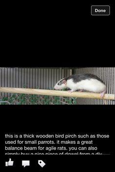 rat cage enrichment