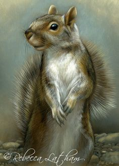 "From the ""Squirrels are people too"" FB page - Gray Squirrel, 5in x 7in, watercolor on board by Artist Rebecca Latham"