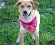 Big dog ranch rescue on pinterest big dogs adoption and save a dog