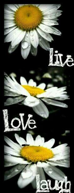 Daisy love. . .