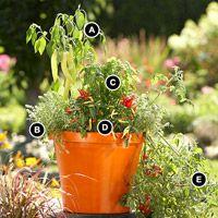 Vegetable Garden in a Pot