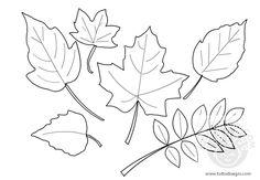 Risultati immagini per disegno foglie autunno