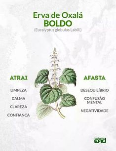 Image about text discovered by αทαťҽɾɾα☼☽☆゚ on We Heart It I Feel Good, Good To Know, Ayurveda, Eucalyptus Globulus, A Kind Of Magic, Baby Witch, Orisha, Witch Aesthetic, Healing Herbs
