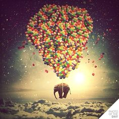 Fly up up and away with me, Ella Elephant. - PHOTO OF THE DAY 13 jun 2012 @nois7 - @Belieber&Mahomie- #webstagram