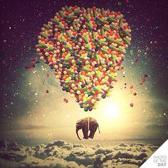 Waar gaat de olifant naar toe?