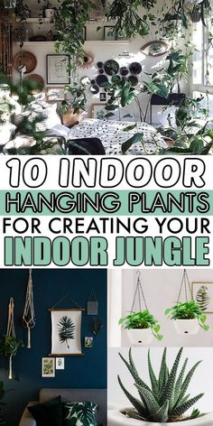 Best Indoor Hanging Plants, Hanging Planters, Hanging Baskets, Air Plants, Potted Plants, Low Light Plants, Plant Guide, Spider Plants, Led Grow