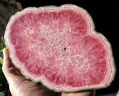 My Very Finest. A 6.75 Inch Polished Rhodochrosite. Thick Cut at .5 inch. Old time Collection from Capillitas, Argentina.
