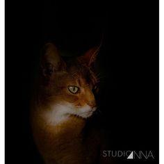 StudioAnna  -  Sobek  #studioanna_paris #retouche #Nikon #art #portrait #studio #photographyislifee #photo #gold #cat #animal #photoshop