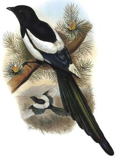 griphon: У техно сороки на хвосте: свежие сплетни и слухи о... Mushroom Crafts, Color Pencil Sketch, Cactus Terrarium, Bird Theme, Animal Posters, Nature Journal, Stuffed Animal Patterns, Painting For Kids, Bird Art