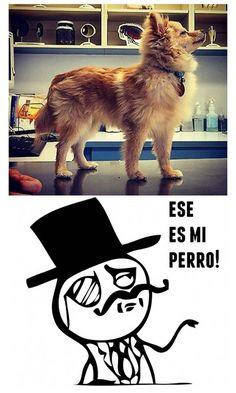 El perro de todo un caballero