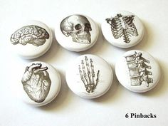 Anatomy 1 inch PINBACKS PINS BADGES hand brain skull anatomical heart anatomy human body bones skeleton geekery button stocking stuffer