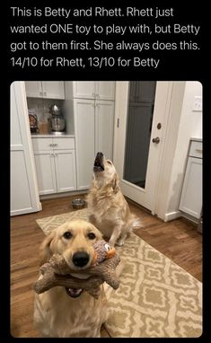 Another week is coming to an end, and you deserve a break. It's been a long week, and just like these doggos, you've been doing your best. So, you only need one final push, getting you through the last day of this ruff week, and we're here to provide it. #internetmemes #wholesome #dogs #pupper #puppy #dogmemes #funnymemes #cute #Memes #doggo #bark #doggomemes #funny
