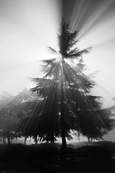 Misty Bursa
