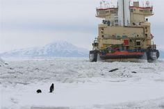 A penguin watching the icebreaker ship near McMurdo Base in Antarctica.