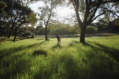 Woodlands shoot location - centennial park