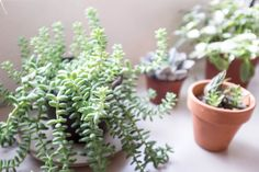 7-foolproof-secrets-to-decorating-with-plants-detail.jpg 3,000×2,000 pixels