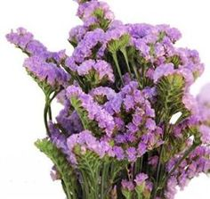 Statice - Sinuata - Lavender Mayesh Flower Library  Available year round