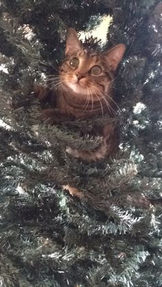 This fluffball who just realised the huge mistake they made. | 19 Cats Who Are Beautiful Furry Idiots