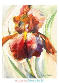Iris Art Prints at AllPosters.com