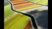 Tulipanes desde el aire. Foto: Anders Andersson, National Geographic