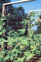 Vertical Gardening Tips. You can achieve greater harvests with vertical growing. The author's favorite type of plant support, the sturdy woven-wire trellis, is durable enough to last for years.