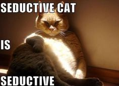 Seductive cat IS seductive