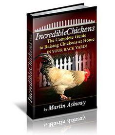 Raising Organic Chickens