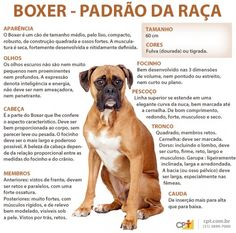 Padrão da raça Boxer All Breeds Of Dogs, Pet Breeds, Pet Dogs, Dog Cat, Pet Paradise, Funny Boxer, Vet Med, Boxer Puppies, Doberman Pinscher