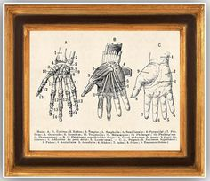 Skeleton Hand, Anatomy Hand on aged paper,  from vintage dictionary, Anatomic Print,  print 14x11 educational decorative wall decor school