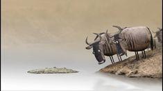 Wildebeest from Birdbox Studio Crocodile, Movie Talk, Stop Motion, Caricature, Funny Animals, Moose Art, Wisdom, Place Card Holders, Animation