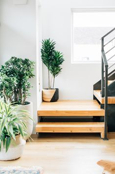 wood and metal staircase with plants