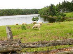 Kings Landing Historical Settlement, New Brunswick, Canada