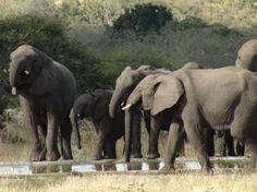 Wildlife Safari, Elephant, Animals, Animales, Animaux, Elephants, Animal, Animais