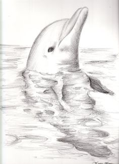 Dolphin drawing This artist has real talent! Amazing Drawings, Beautiful Drawings, Cool Drawings, Drawing Sketches, Amazing Art, Sketching, Animal Drawings, Pencil Drawings, Dolphin Drawing