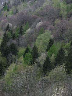 April in Val di Mello, Italy