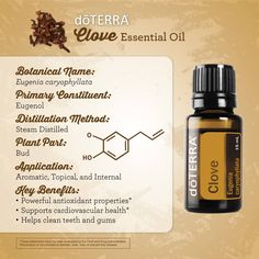 Clove Essential Oil, Clove Bud, Gum Health, Helping Cleaning, Parts Of A Plant, Doterra Essential Oils, Massage Oil, Teeth Cleaning, Cleanse