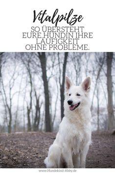So übersteht eure Hündin ihre Läufigkeit problemlos. Husky, Dogs, Animals, Fitness, Dog T Shirts, Pets, Alternative Medicine, Dog Food, Animales