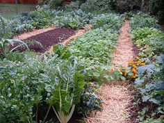 Guide To Planting Fall Vegetables