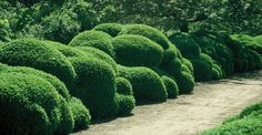 Cloud hedges by master garden architect Jacques Wirtz, Belgium.