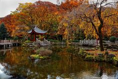 http://nsp-jp.com/gifu/  岐阜公園 -日中友好庭園 Japan-China Friendship Park at GifuPark in Gifu city Gifu Prefecture Japan  #岐阜公園  #日中友好庭園 #岐阜市 #岐阜県  #故郷 #故郷巡礼 #聖地巡礼 #岐阜命名450年 #写真好きな人と繋がりたい #gifuphoto #travel #traveling #journey #tourism #photo #sugiyamanobu #Unknownjapan #instagram #instagramjapan #JapaneseTemple #JapaneseShrine #JapaneseTradition #TravelJapan #JapanTrip #ExploreJapan #JapanAdventure #JapanHoliday #CoolJapan #WonderfulDestinations #Amazing
