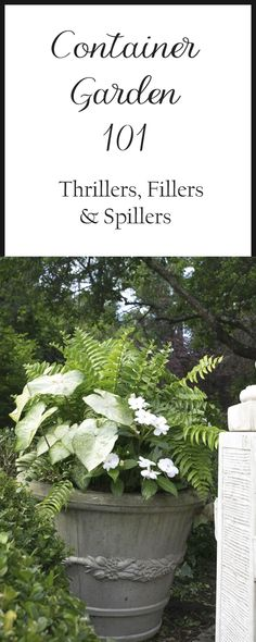 The basics of container gardening: Thrillers, Fillers and Spillers. Lists of suggested plants and plant combination 'recipes' and examples. #ContainerGarden
